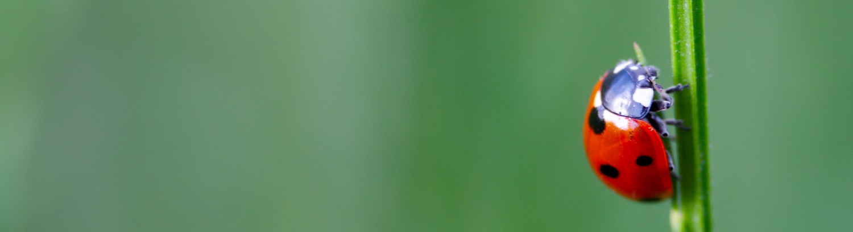 écho vert